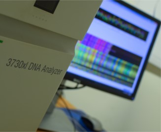 ABI3700 sequencing